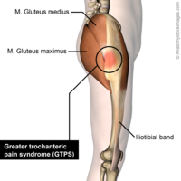 glute max manual muscle test